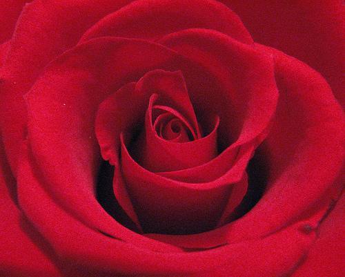 Freshman 15: Valentine's Day Edition